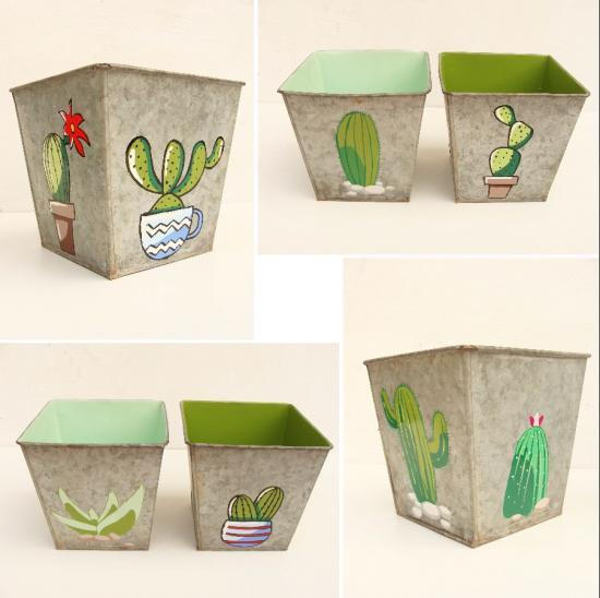 Cactus x 4